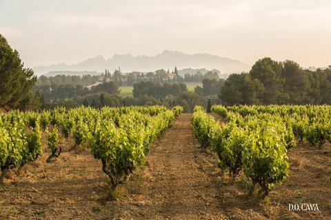DO_CAVA_LANDSCAPE_2_original.jpg