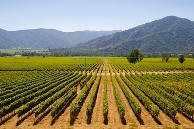 エチュヴェリア Vineyards_Chile.jpg