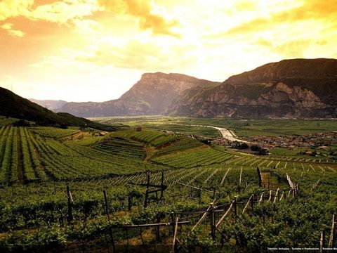 フェラーリxVineyard-in-Trentino-760x570_jpg_pagespeed_ic_qJiuQUYXkL.jpg