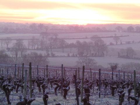 ラゴティエールFreres-Couillaud-Muscadet-Chardonnay-Ragotiere-paysage6-visite-degustation-1.jpg